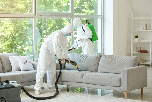 What Are The Common Bacteria In Home?